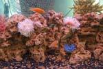Коралл: продажа кораллов в Санкт-Петербурге