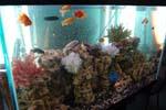 Морской аквариум в Санкт-Петербурге